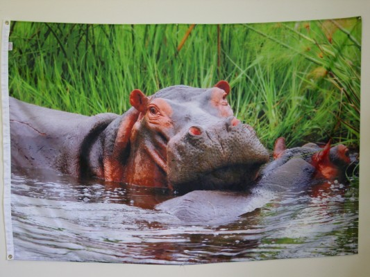 Hippo - Digital Print Flag.JPG